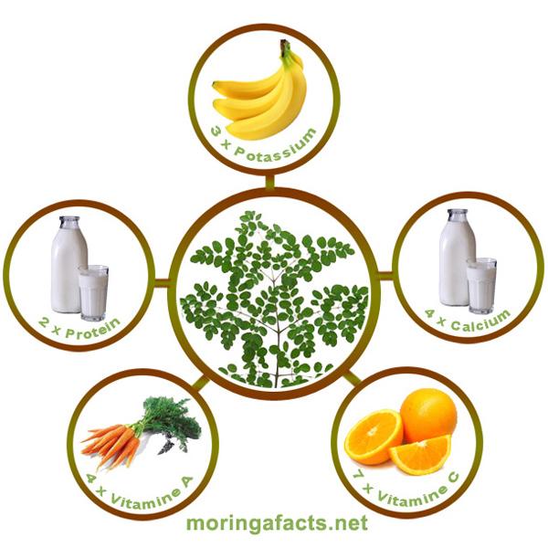 Moringa Oleifera - Moringa Facts
