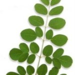 Moringa Leaves vs. Spinach