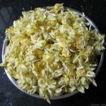 Moringa oleifera – Moringa Flower