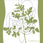 Moringa Helps With Digestion Process