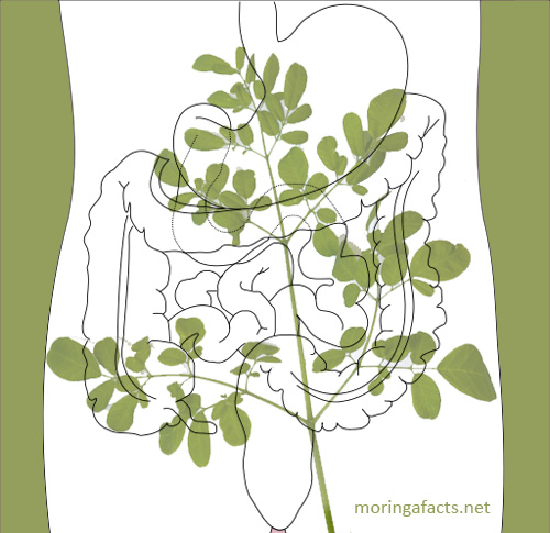 Moringa helps with digestion process- Moringa facts