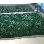 Moringa Processing video