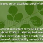 Moringa Leaves – Excellent Source Of Protein