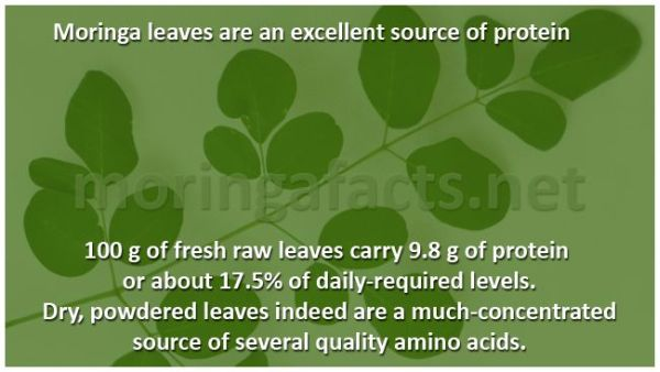 Moringa Leaves - Excellent Source Of Protein - Moringa facts