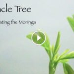 The Miracle Tree – A Guide to Cultivating the Moringa